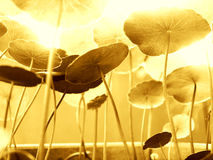 ljust växande solljus arkivbild