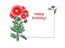 Ljust vattenfärgkort med röda blommor white f?r bana f?r bakgrundschrysanthemum clipping isolerad Botanisk illustration för din i stock illustrationer