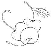 Ljuv trädgård - tre körsbär med ett blad Royaltyfri Foto