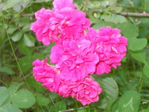 Ljuva blommor fotografering för bildbyråer