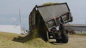 LKW entlädt geerntet für Silomais auf dem Bauernhof stock video footage