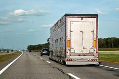 LKW transportiert Haustiere, Vieh, Viehbestände entlang der Landstraße stockfotos