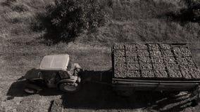 LKW unter Reihen des Weinbergs bevor dem Ernten Lizenzfreies Stockbild