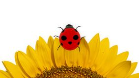 Lladybird d'insecte sur le tournesol d'isolement dans le blanc - rendu 3d Images libres de droits