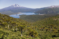 Llaima volcano from Conguillio national park Royalty Free Stock Images