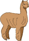 Llama alpaca Royalty Free Stock Photography
