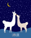 Llama Alpaca. Two cute llama Kiss at night under the starlit sky Royalty Free Stock Image