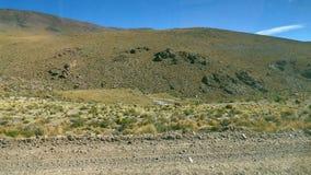Llama in Altiplano. Bolivia, south America. stock photos