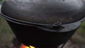 Llama azul que juega debajo de un pote metálico con una tapa en verano en la cámara lenta metrajes