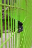 Llama behind fence Stock Image