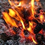 Llama blanda hermosa del primer del fuego ardiendo del campo con los conos del pino imágenes de archivo libres de regalías