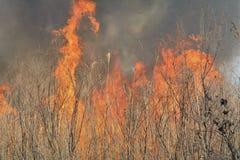 Llama del brushfire 29 foto de archivo