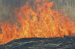 Llama del brushfire 22 imagen de archivo