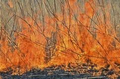 Llama del brushfire 23 fotografía de archivo libre de regalías