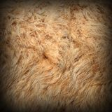 Llama detail of fur Stock Images
