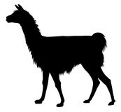 Llama. Detailed vector illustration of llama silhouette Royalty Free Stock Photography