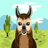 Cute llama eats grass in mountains royalty free illustration