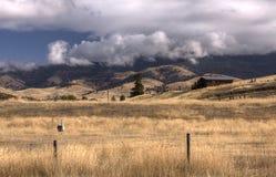 Llama farm in Montana. Royalty Free Stock Image