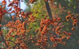 Llama floreciente del bosque foto de archivo libre de regalías