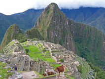 Llama looking out into Machu Picchu Stock Photos