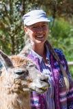 Llama in Peru Stock Images