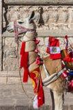 Llama with peruvian flags Arequipa Peru stock photography