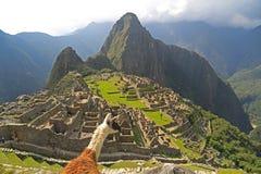 Llama que mira Machu Picchu, Perú Imagenes de archivo