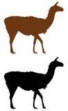 Llama silhouette Stock Photos