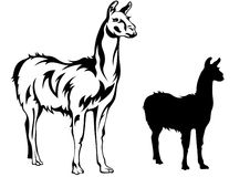 Llama vector Stock Photos