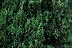 Llama verde Imagen de archivo libre de regalías
