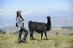 Llama and a woman. A woman is approaching a llama royalty free stock images