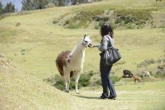 Llama and a woman royalty free stock photos