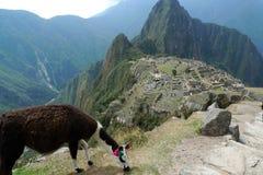 Llama y Machu Picchu Imagenes de archivo
