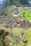 Llama y Machu Picchu Foto de archivo