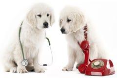 Llamada del veterinario Foto de archivo libre de regalías