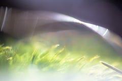 Llamarada cubierta de musgo Imagen de archivo libre de regalías
