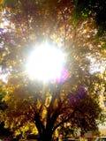 Llamarada de la lente del verano fotos de archivo