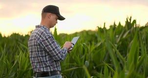 Llamarada de la lente: granjero con una tableta para supervisar la cosecha, un campo de maíz en la puesta del sol Granjero del ho almacen de metraje de vídeo