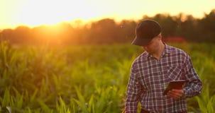 Llamarada de la lente: granjero con una tableta para supervisar la cosecha, un campo de maíz en la puesta del sol Granjero del ho almacen de video