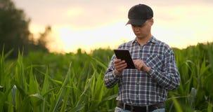 Llamarada de la lente: un granjero moderno con una tableta en sus manos examina lanzamientos del maíz para analizar la cosecha y  almacen de video