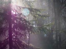 Llamarada de niebla de la lente del bosque Imagen de archivo