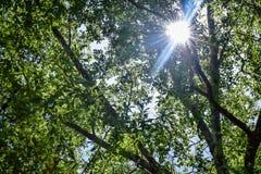 Llamarada de Sun a través de los árboles Imágenes de archivo libres de regalías