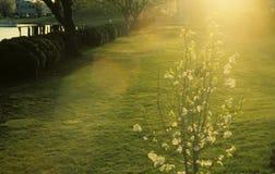 Llamarada del sol de la tarde en las flores en parque Fotos de archivo libres de regalías