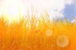 Llamaradas de la lente rayos suaves del sol Foco selectivo Fondo floral Estilo retro fotos de archivo libres de regalías