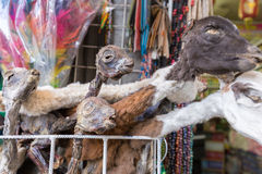 Llamas ξηρά αγορά μαγισσών κεφαλιών εμβρύων, Λα Παζ Βολιβία στοκ εικόνες με δικαίωμα ελεύθερης χρήσης