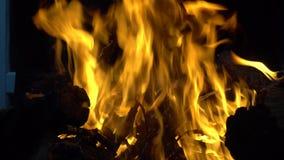 Llamas brillantes cuando madera ardiente en la parrilla almacen de video