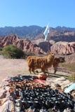 Llamas and crafts Royalty Free Stock Images
