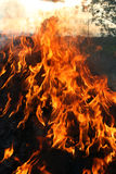 Llamas de un fuego ardiente Imágenes de archivo libres de regalías