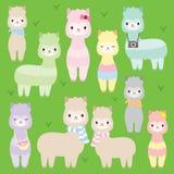 Llamas lindas de las alpacas Fotografía de archivo