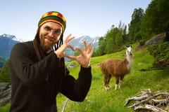 Llamas in the mountains. Royalty Free Stock Photos